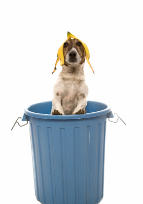 Dog In The Trash Can