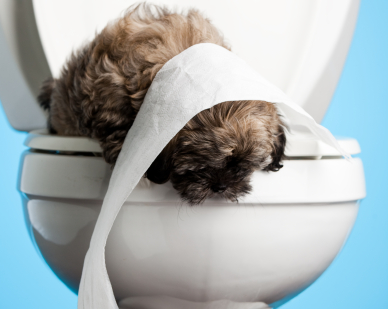 Dog in Toilet