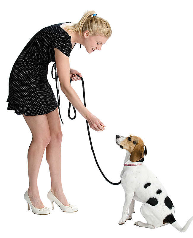 How To Train A Dog To Walk On A Lead
