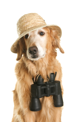Dog With Binoculars